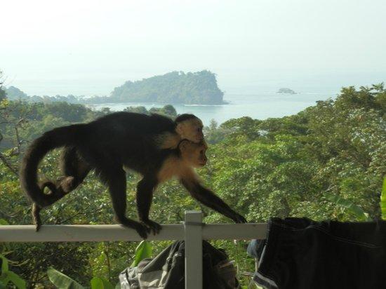 Villa Manuel Antonio: Mama and Baby walking across our railing