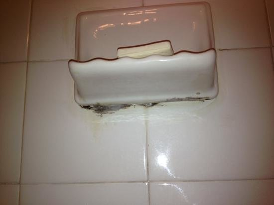 Super 8 Fort McMurray: mould under the soap dish in the shower