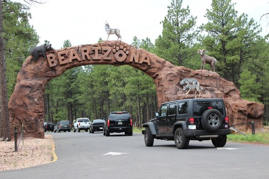 Bearizona Wildlife Park: Bearizona is awesome