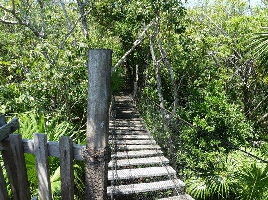 Jardin Botanico Dr. Alfredo Barrera Marin: Swinging Bridge