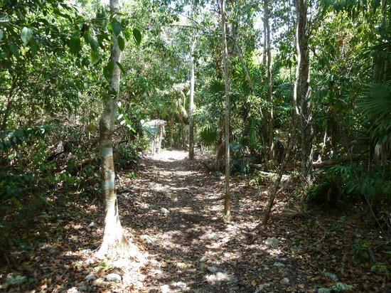 Jardin Botanico Dr. Alfredo Barrera Marin: Nice Trails