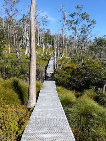Discovery Parks - Cradle Mountain: Board walk to Dove Lake