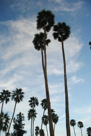 INNdulge: Towering palms above property