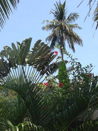 Phuket Pool Residence: la vue du jardin