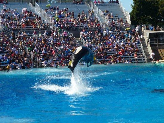 SeaWorld San Diego: Shamu