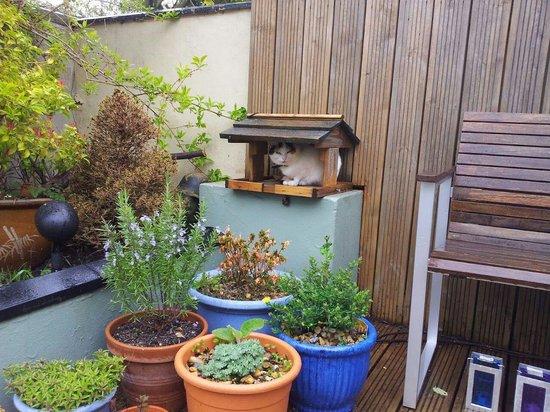 The Coach House: lovely garden