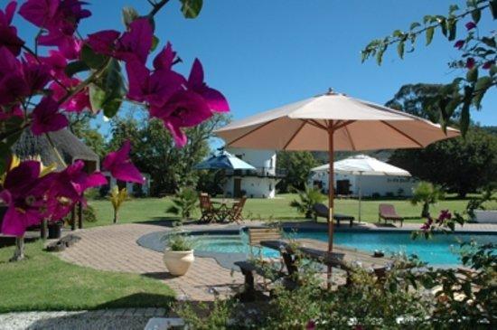 Bella Manga Country House: Our stunning salt-water pool.