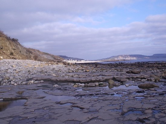 Fossil Hunting Walks: Lyme from Seven Rock Point