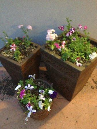 Isis Motel Scone : Pretty garden pots