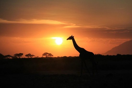 Tortilis Camp: Evening game drive