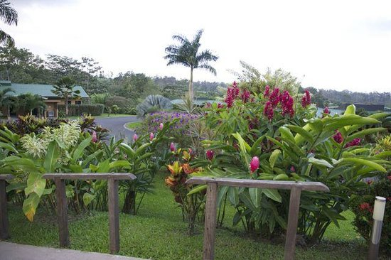 Arenal Manoa Hotel: Beautiful landscaping