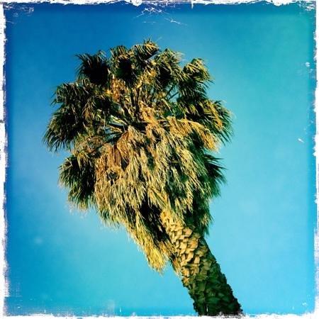Cootamundra Gardens Motel: Tall palm in the garden