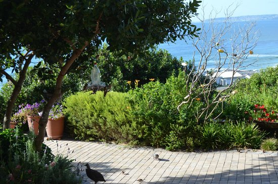 At Whale-Phin Guest House: Garden- and Ocean-View