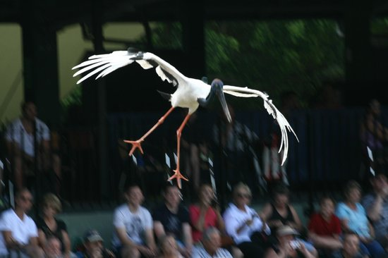 Australia Zoo: flying display,