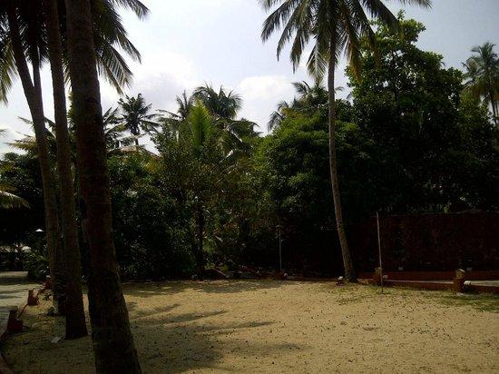 Cambay Palm Lagoon: random