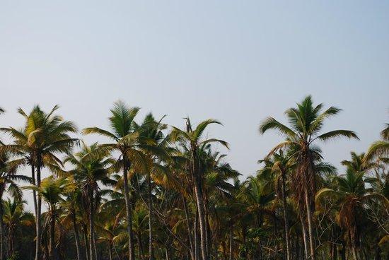 Poovar Island Resort: Serene Backwaters