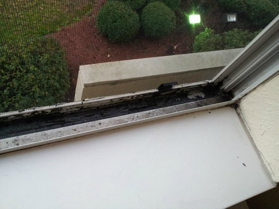 Comfort Inn Birmingham - Irondale: Zimmerfenster