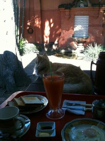Hostal Rio Magdalena: breakfast with friendly house cat
