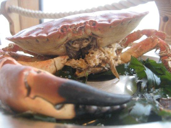 Fernhill Hotel: Fresh crab in Lyme Regis