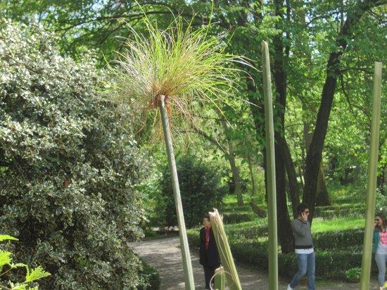 Orto Botanico di Parma