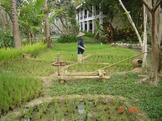 วิลล่าสันติ รีสอร์ท & สปา: parte de los jardines