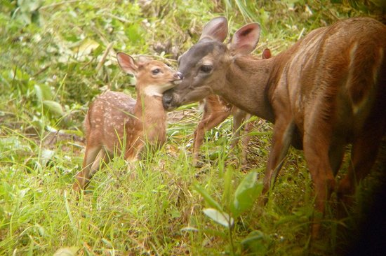 Rancho Margot: Deer on the 'Mirador trail'