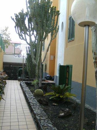 Apartamentos Judoca Beach : inkom