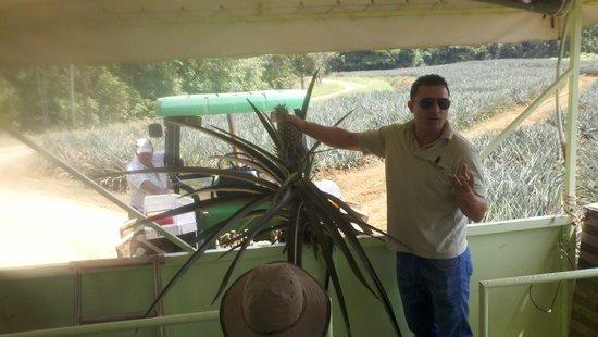 Finca Corsicana Pineapple Farm Image