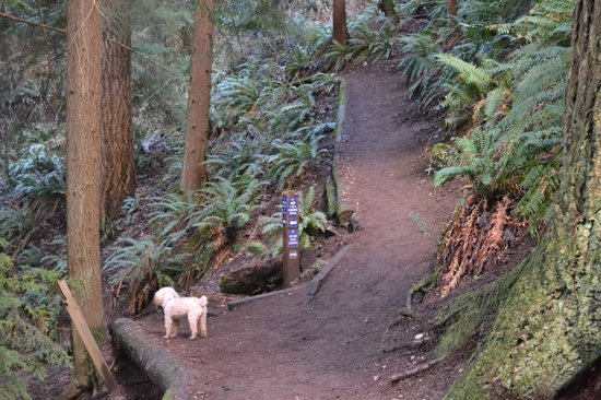 Boeing Creek Park: My hiking buddy on the Forest Loop trail