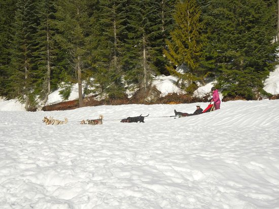 Canadian Wilderness Adventures: dogsledding