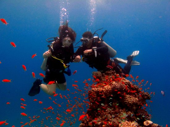 Deep Blue Divers Dahab : ... Darling it's better, down where it's wetter