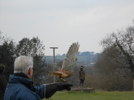 Yaraks Birds Of Prey Falconry Centre : Flying Kestrels