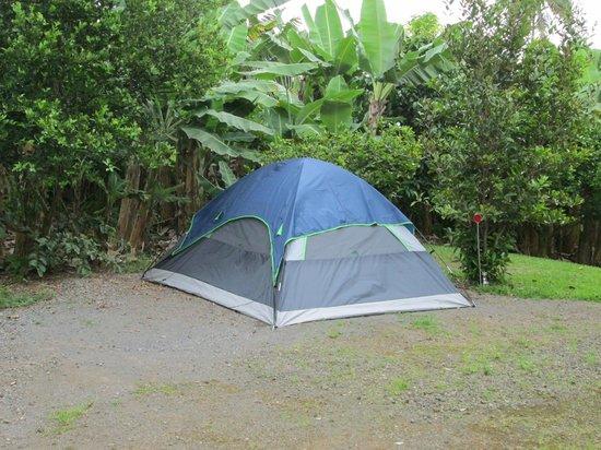 Wild Ginger Inn Hotel & Hostel: Garden Tenting