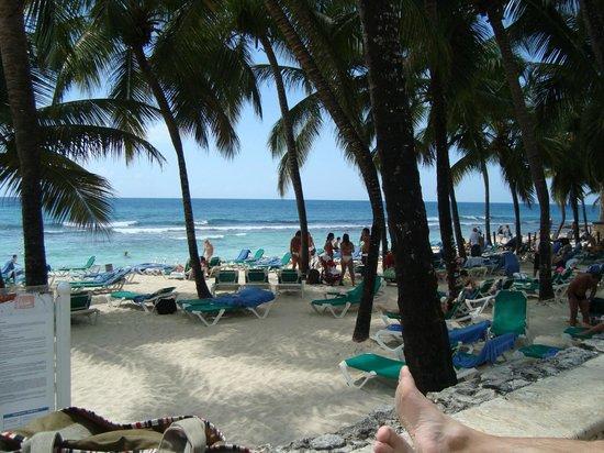Viva Wyndham Dominicus Palace: PLAYA DEL BEACH