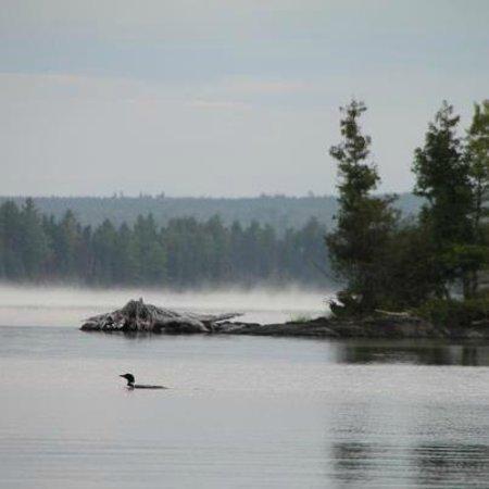 Moosehead Lake: Tomhegan Summer Loon at sunrise