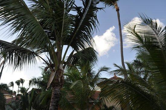 Grand Bahia Principe Punta Cana: Blue sky