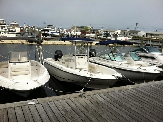 Lavallette, Nueva Jersey: Boats available at Aqua Rentz at Ocean Beach Marina