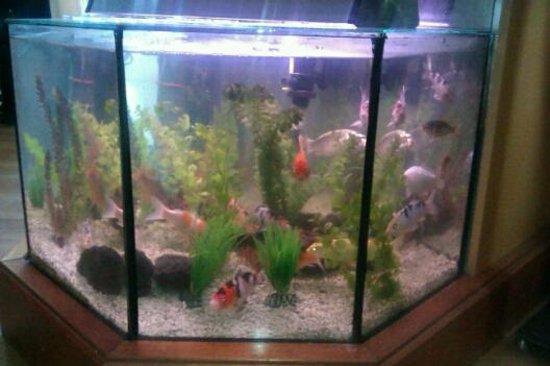 Fish Church: Aquarium im Restaurant