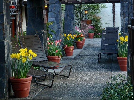 Roman Spa Hot Springs Resort: Arbor tulips