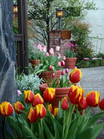 Roman Spa Hot Springs Resort: More spectacular tulips!