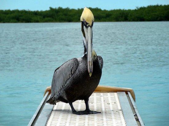 Sirena Beach : Acercate si sos guapo...!!!