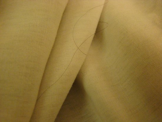 Miami International Airport Hotel: Hair on the bed sheets