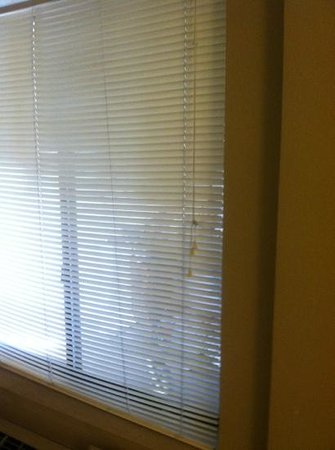 Quality Inn Flamingo: The only window treatment was a set of cheap plastic blinds allowing peep shows from either side