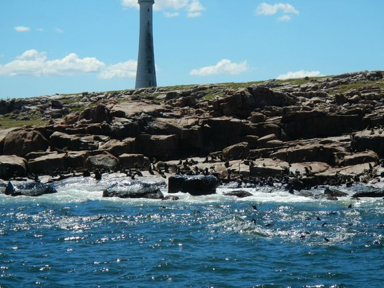 Isla de Lobos: Lighthouse and sea lions.