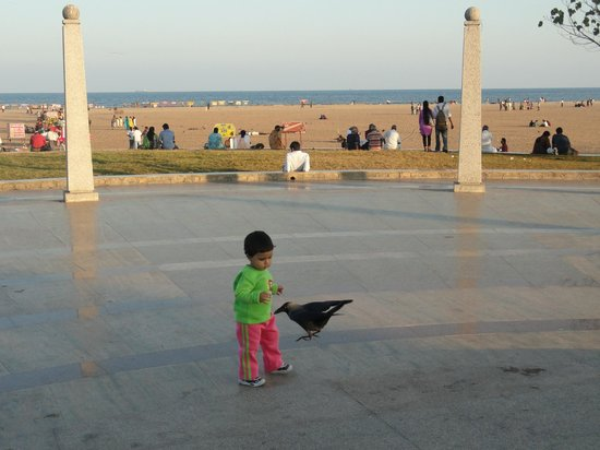Marina Beach: a child playing with crow - marina