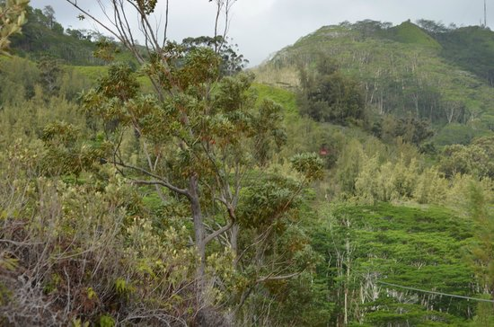 Koloa Zipline: Beautiful