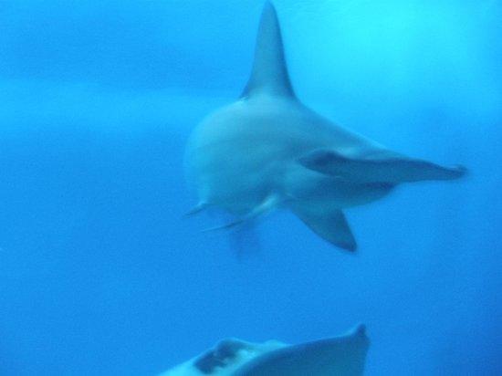 Maui Ocean Center: shark tank