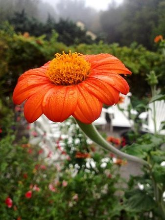 Farmhouse Inn & Restaurant: Dew on a flower at The Farmhouse Inn