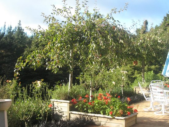 Totara Lodge Homestay: Garden view from patio