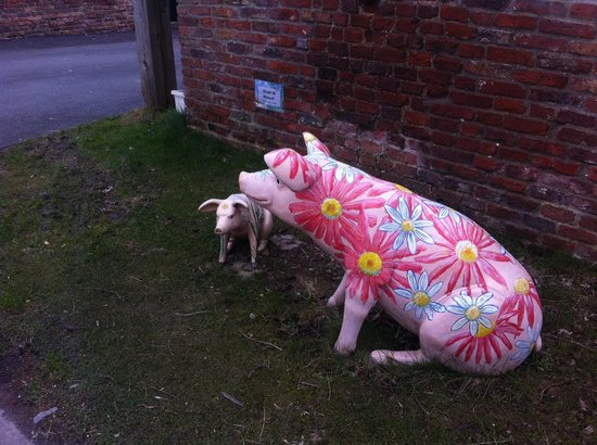 Wolds Village: A welcome from the pigs